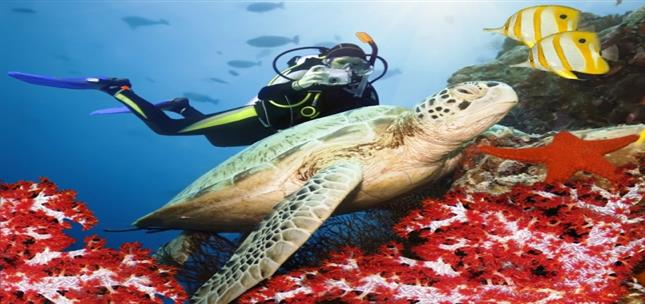 Red Sea Scuba Diving Packages