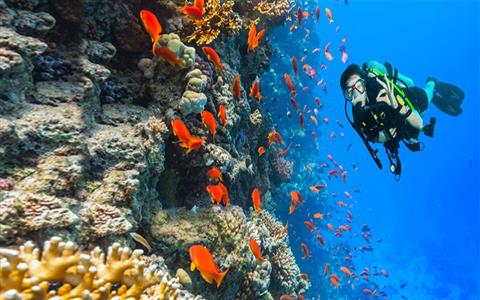 Snorkeling Trip to Ras Mohamed National Park